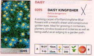 Daisy Kingfisher