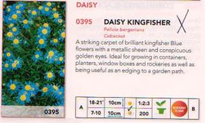 Daisy Kingfisher