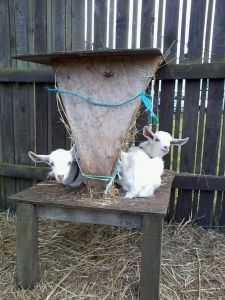 Hanging out on the hay feeder