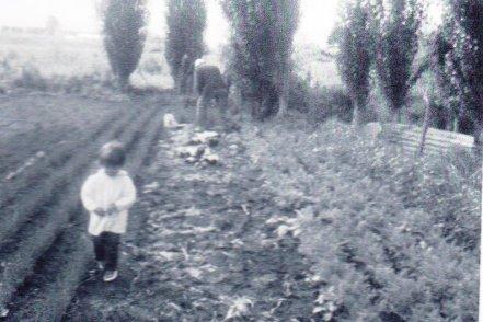 Opa's garden.jpg