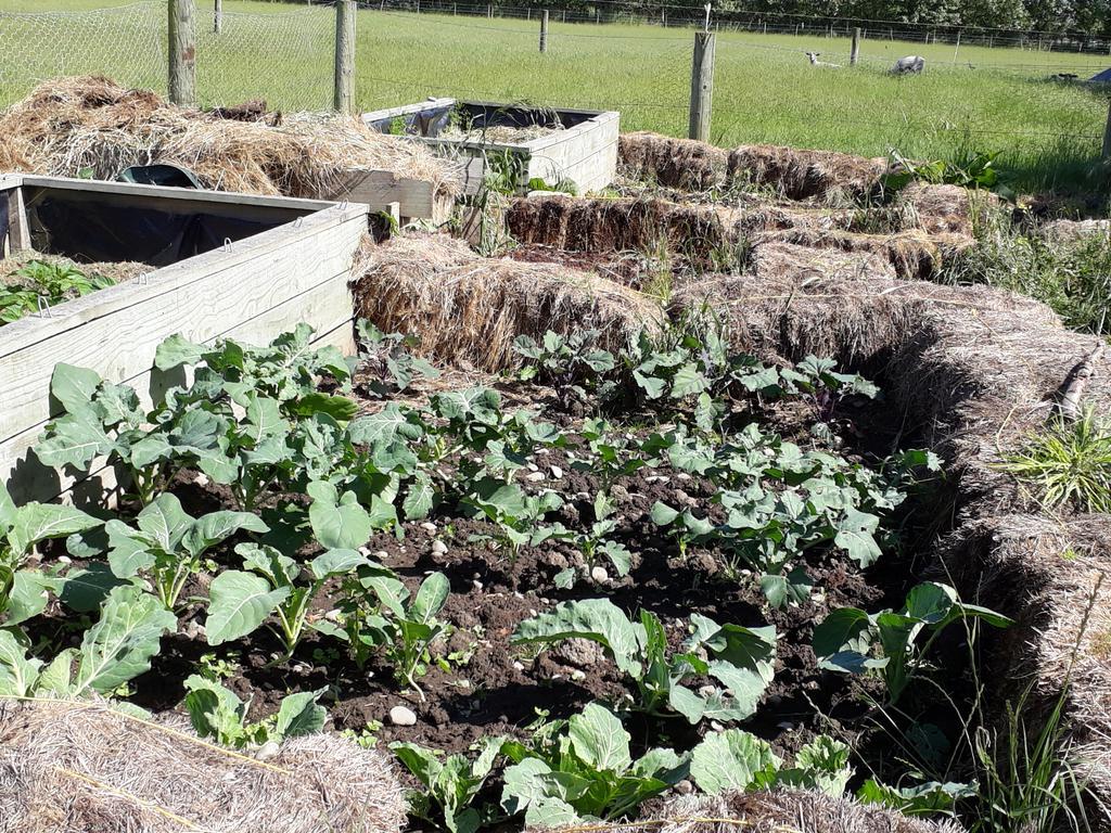 Goat Paddock Garden